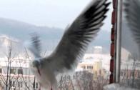 Franciszkańskim okiem 14 – Braciszkowie skrzydlaci